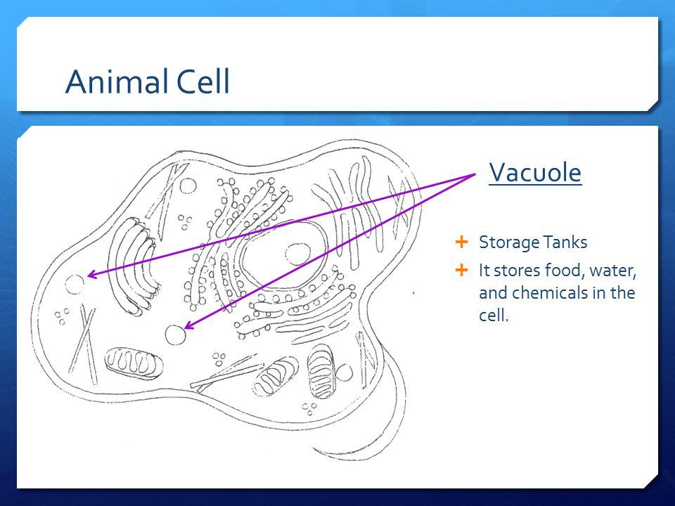 Animal Cell Vacuole Storage Tanks