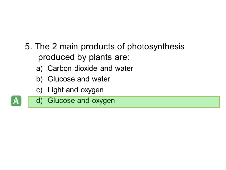 5. The 2 main products of photosynthesis produced by plants are: