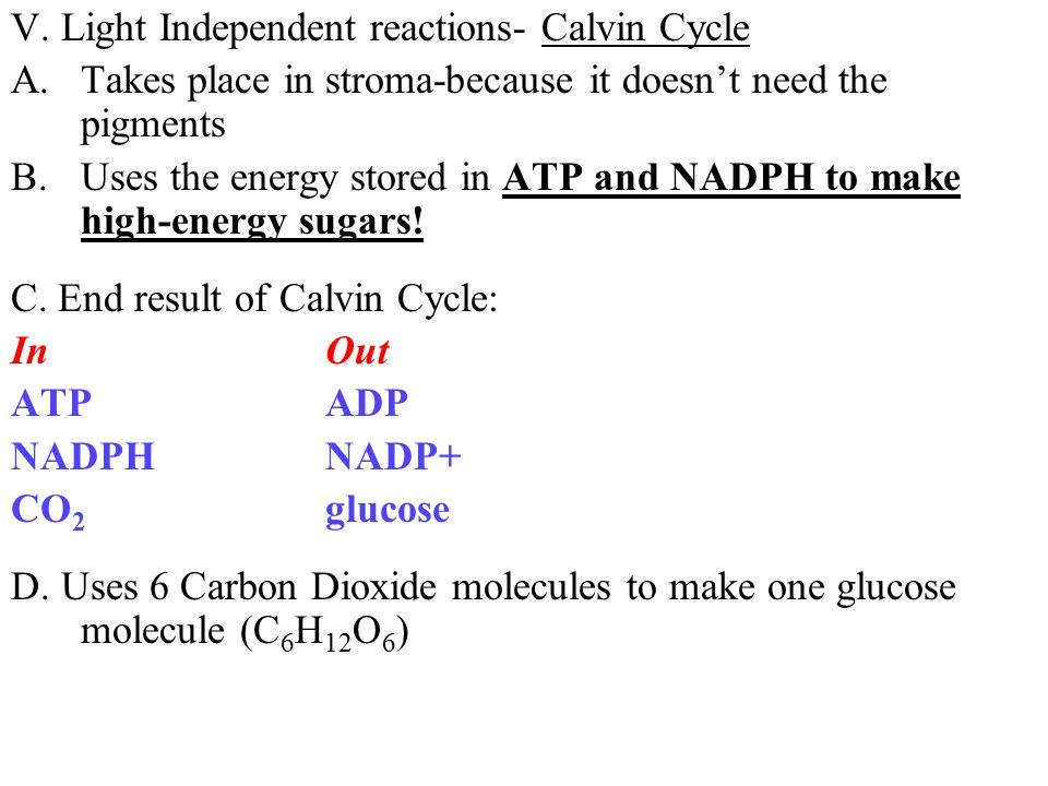V. Light Independent reactions- Calvin Cycle