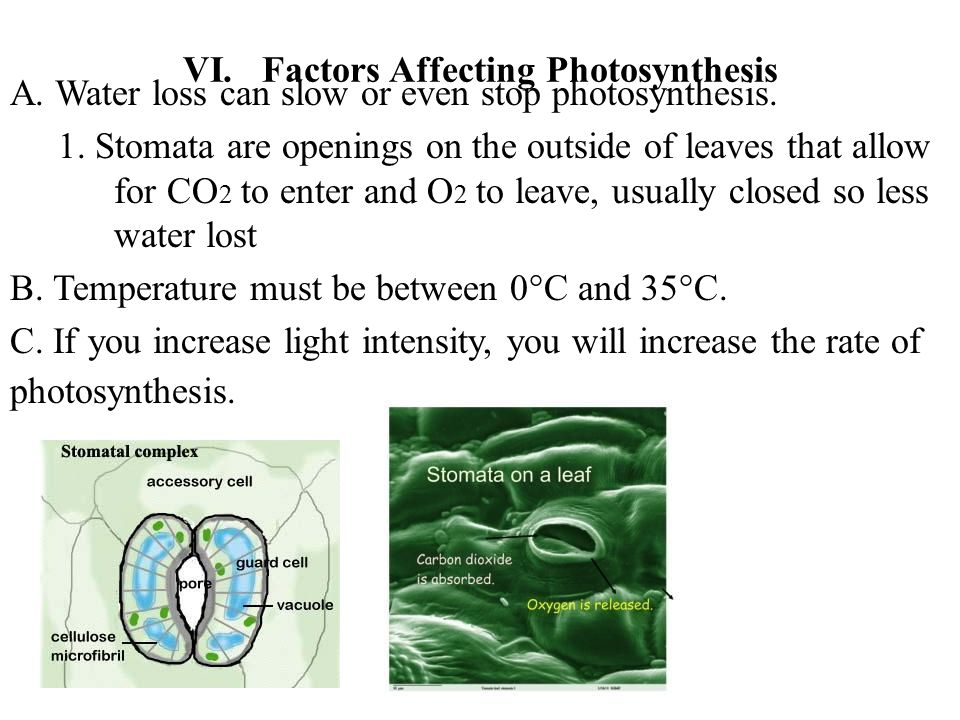 VI. Factors Affecting Photosynthesis