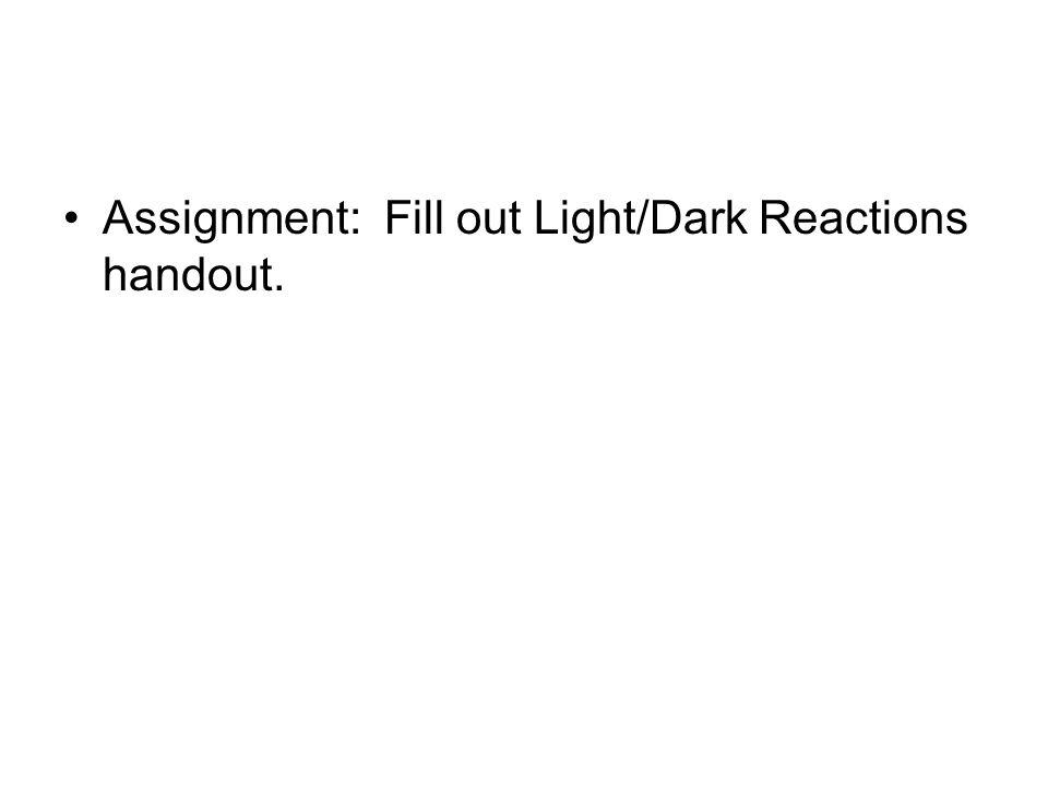 Assignment: Fill out Light/Dark Reactions handout.