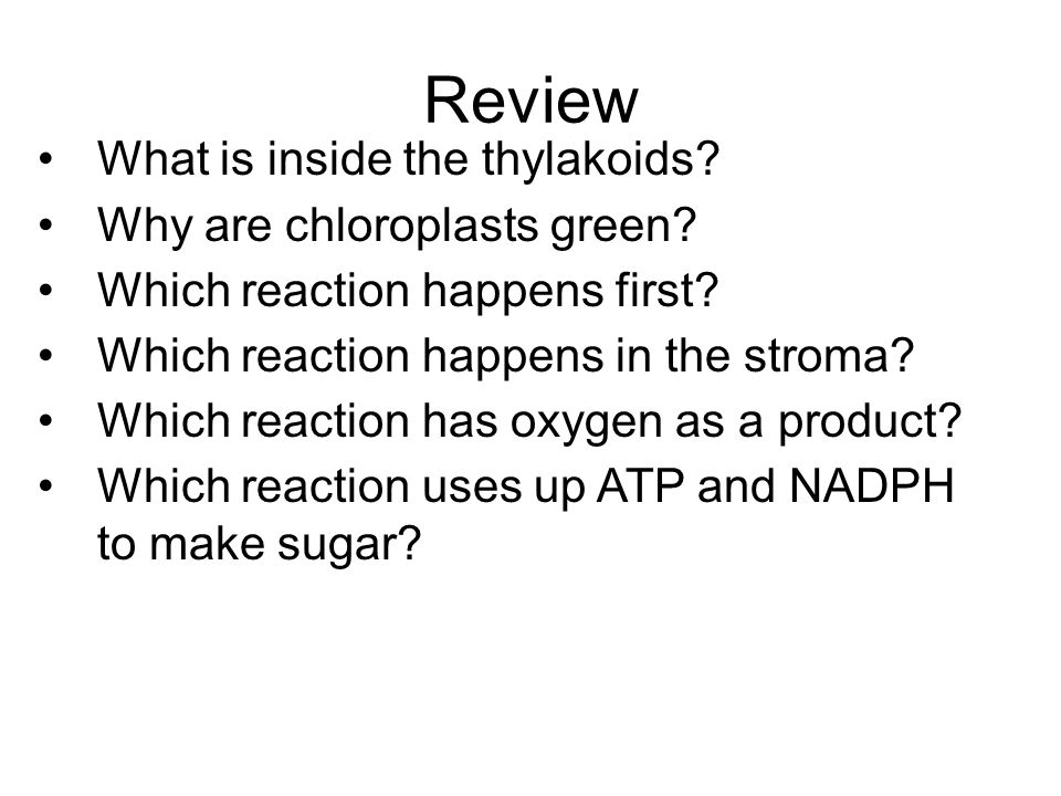 Review What is inside the thylakoids Why are chloroplasts green