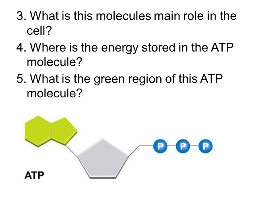 3. What is this molecules main role in the cell