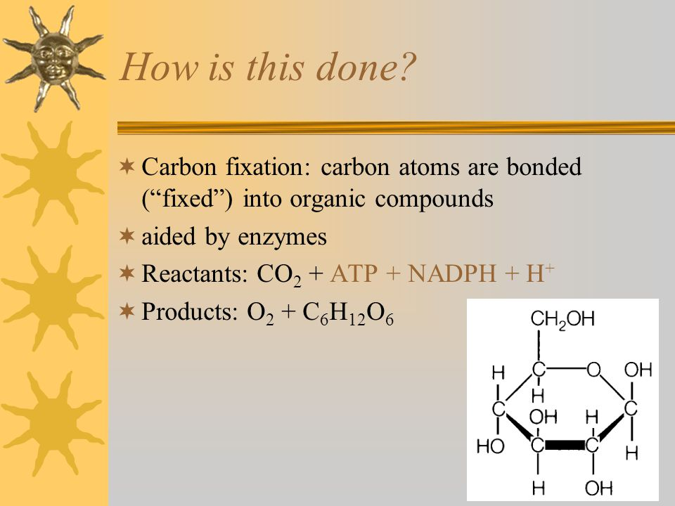 How is this done Carbon fixation: carbon atoms are bonded ( fixed ) into organic compounds. aided by enzymes.
