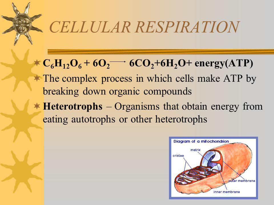 CELLULAR RESPIRATION C6H12O6 + 6O2 6CO2+6H2O+ energy(ATP)