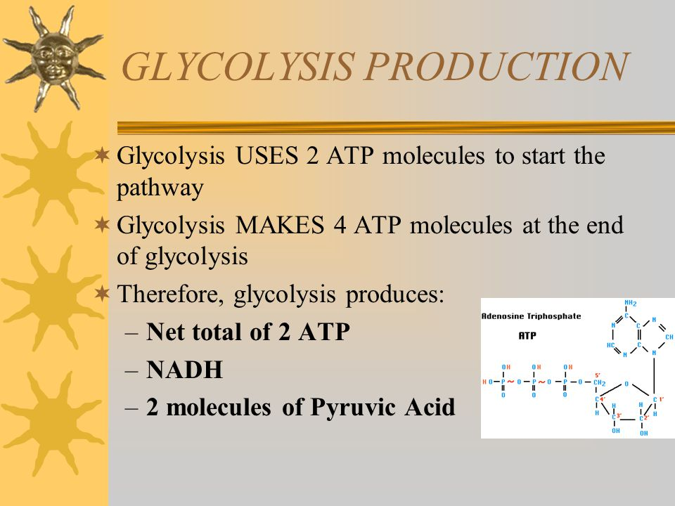 GLYCOLYSIS PRODUCTION