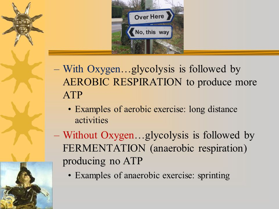 With Oxygen…glycolysis is followed by AEROBIC RESPIRATION to produce more ATP