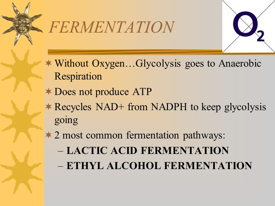 FERMENTATION Without Oxygen…Glycolysis goes to Anaerobic Respiration