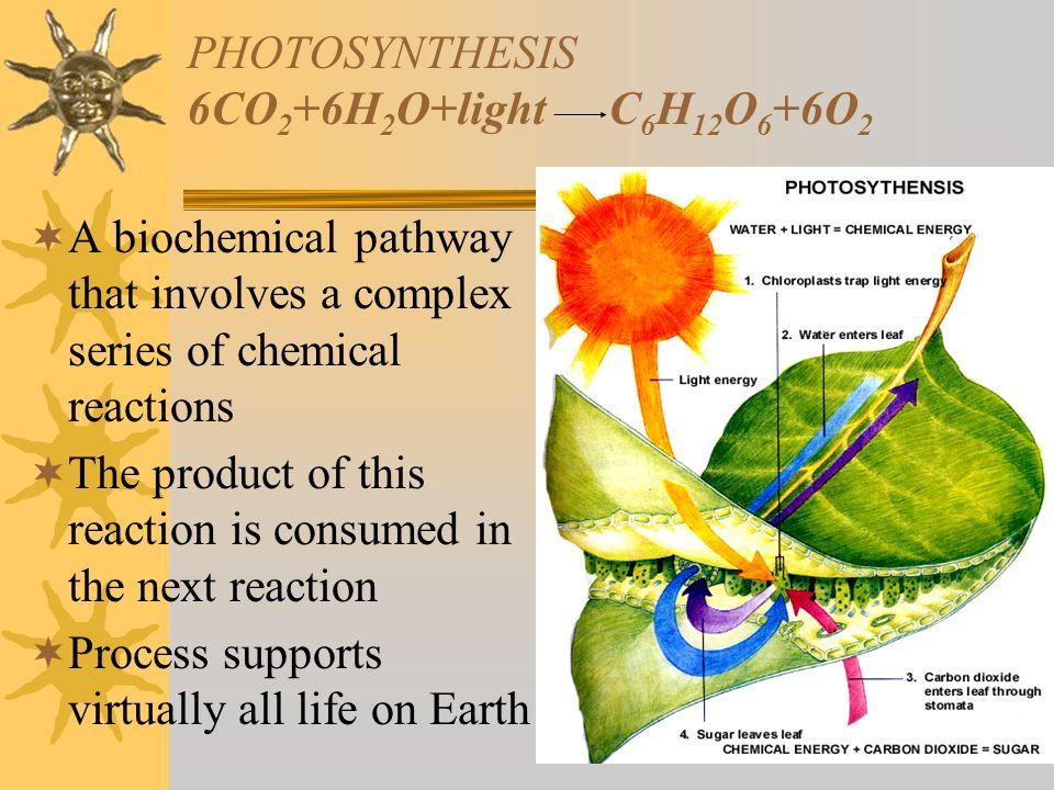 PHOTOSYNTHESIS 6CO2+6H2O+light C6H12O6+6O2