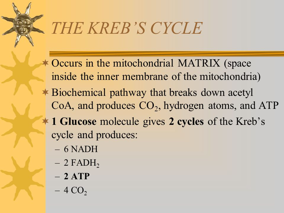 THE KREB'S CYCLE Occurs in the mitochondrial MATRIX (space inside the inner membrane of the mitochondria)