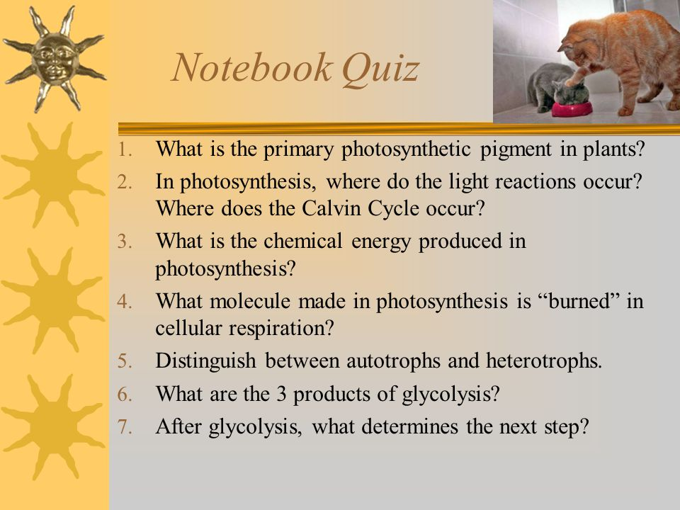 Notebook Quiz What is the primary photosynthetic pigment in plants