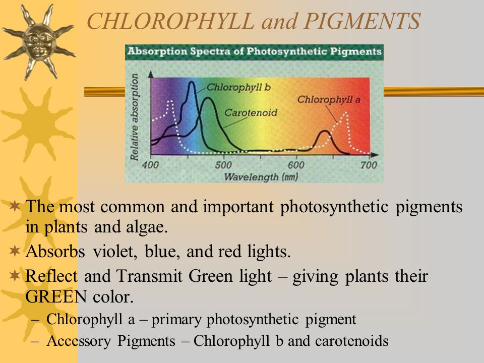 CHLOROPHYLL and PIGMENTS