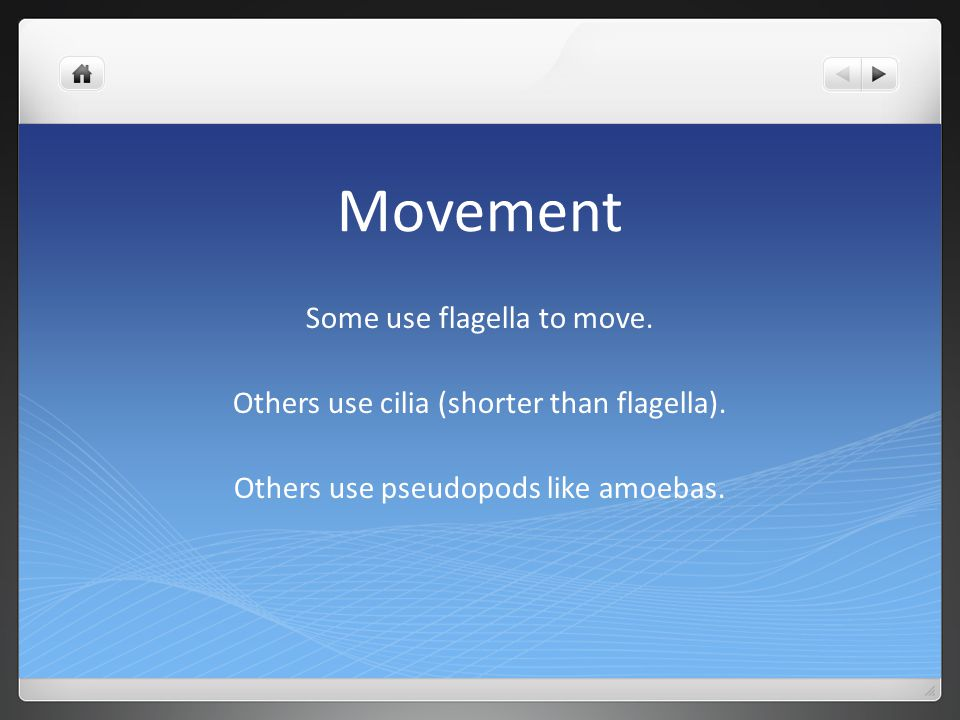 Movement Some use flagella to move.
