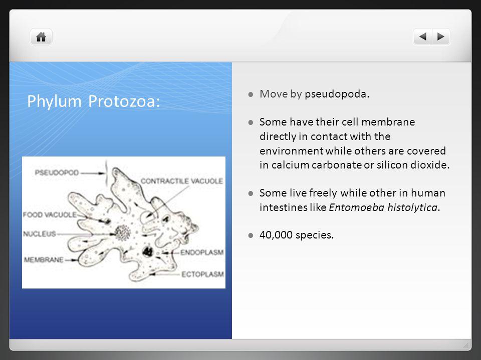 Phylum Protozoa: Move by pseudopoda.