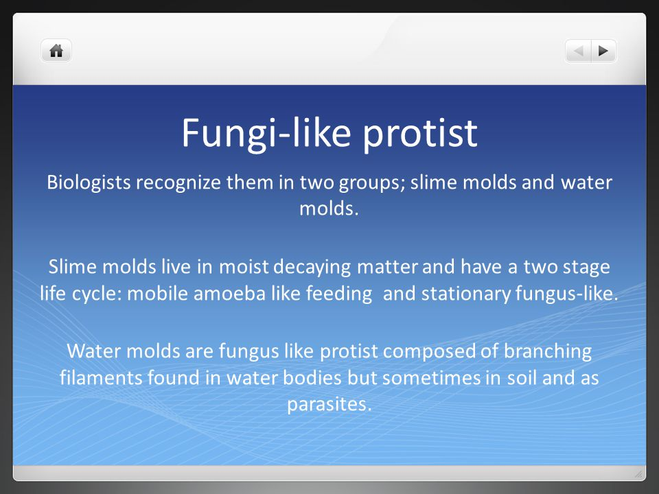 Biologists recognize them in two groups; slime molds and water molds.