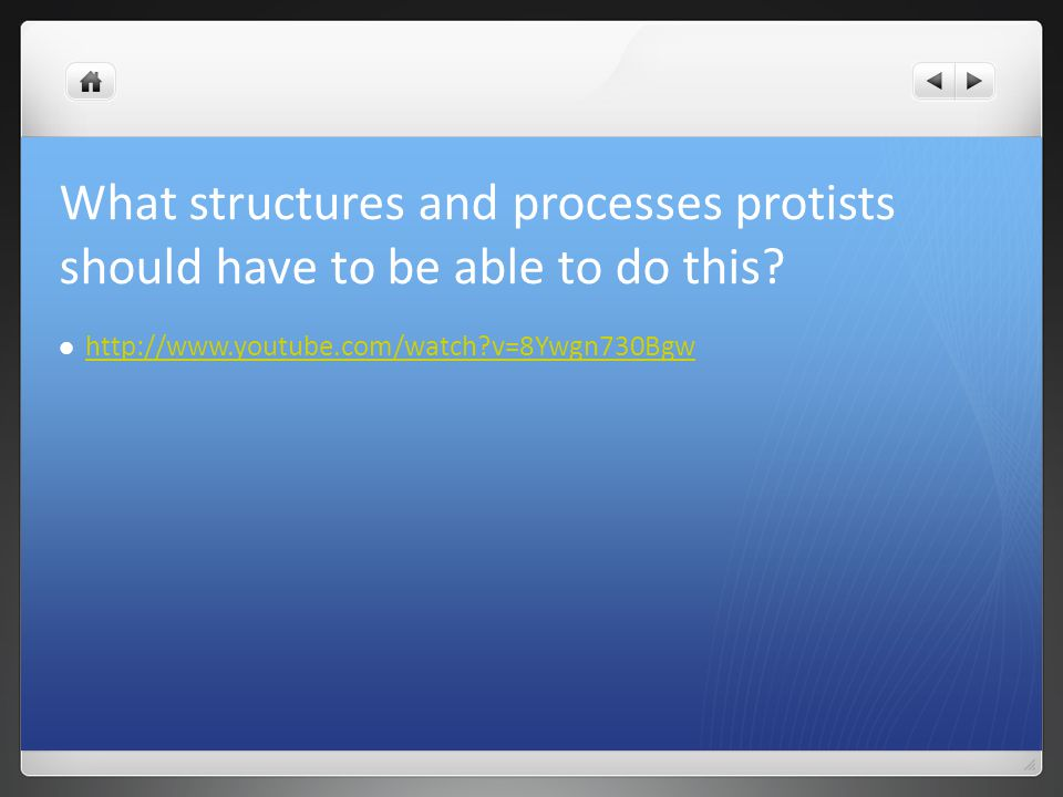What structures and processes protists should have to be able to do this