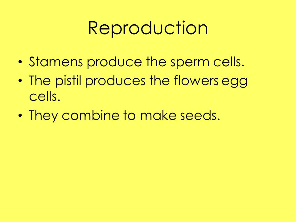 Reproduction Stamens produce the sperm cells.