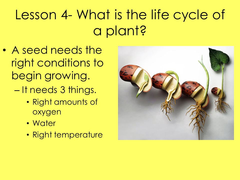 Lesson 4- What is the life cycle of a plant