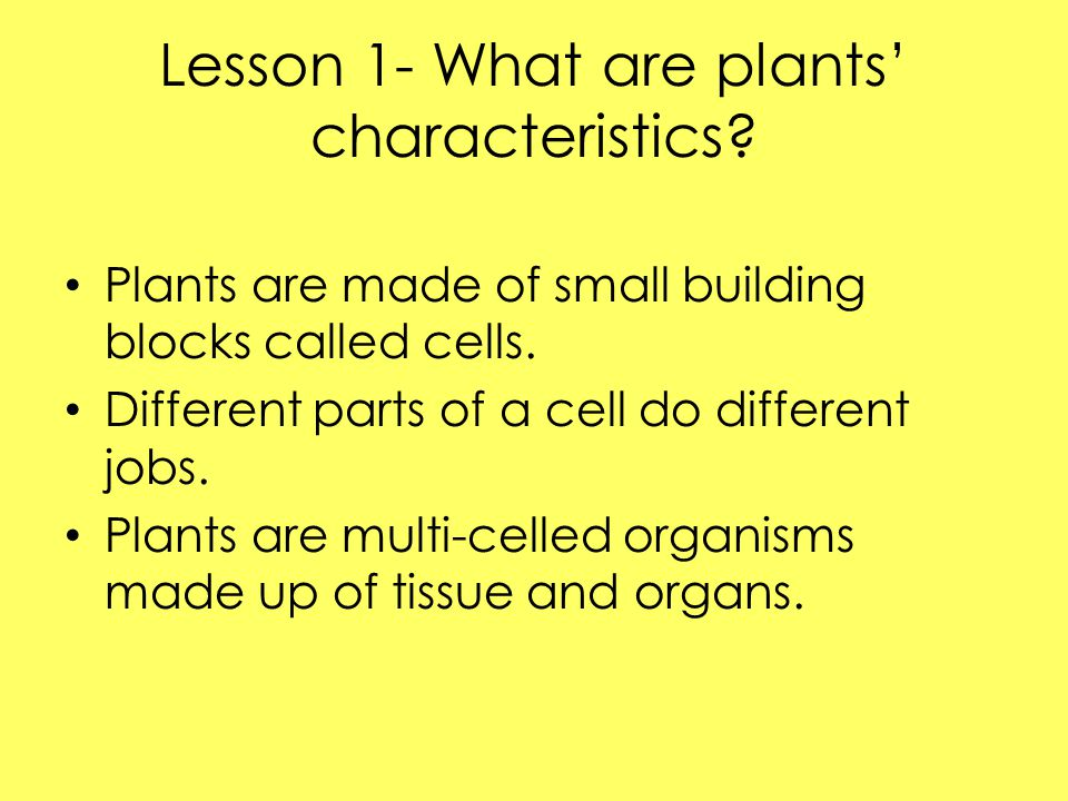 Lesson 1- What are plants' characteristics