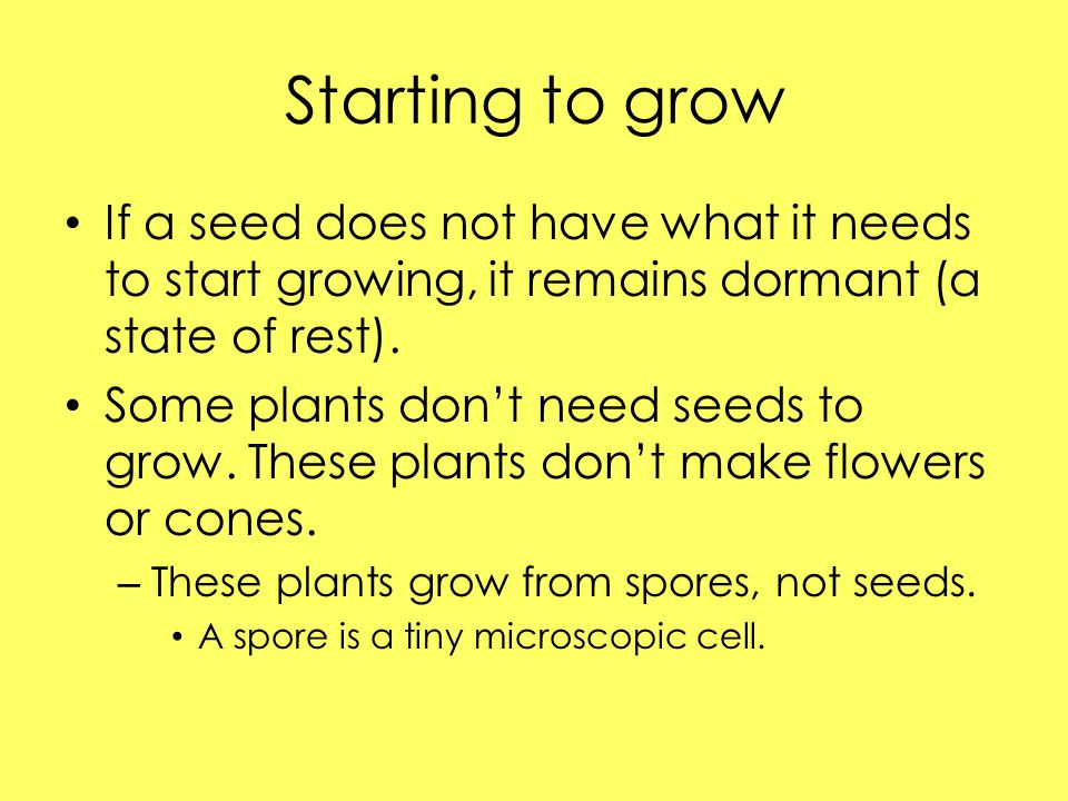 Starting to grow If a seed does not have what it needs to start growing, it remains dormant (a state of rest).
