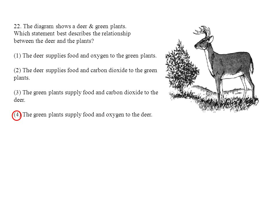 22. The diagram shows a deer & green plants.