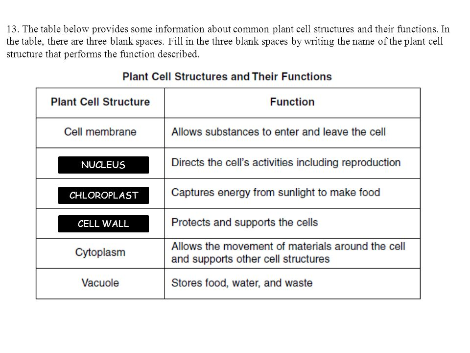 13. The table below provides some information about common plant cell structures and their functions. In the table, there are three blank spaces. Fill in the three blank spaces by writing the name of the plant cell structure that performs the function described.