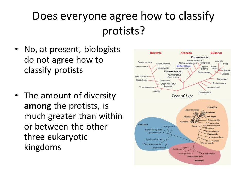 Does everyone agree how to classify protists