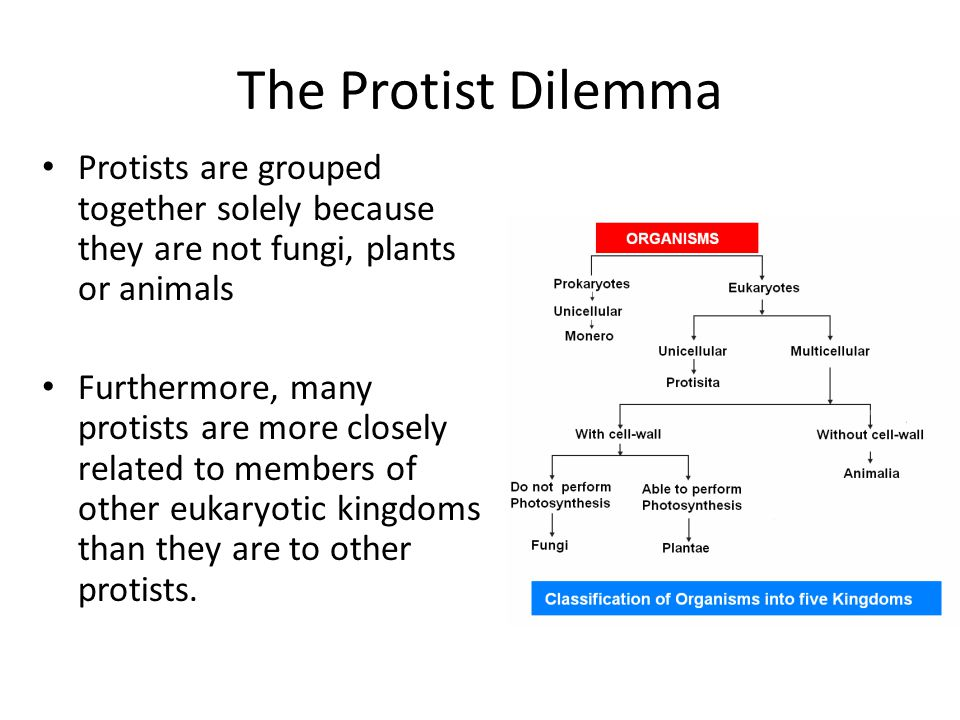 The Protist Dilemma Protists are grouped together solely because they are not fungi, plants or animals.