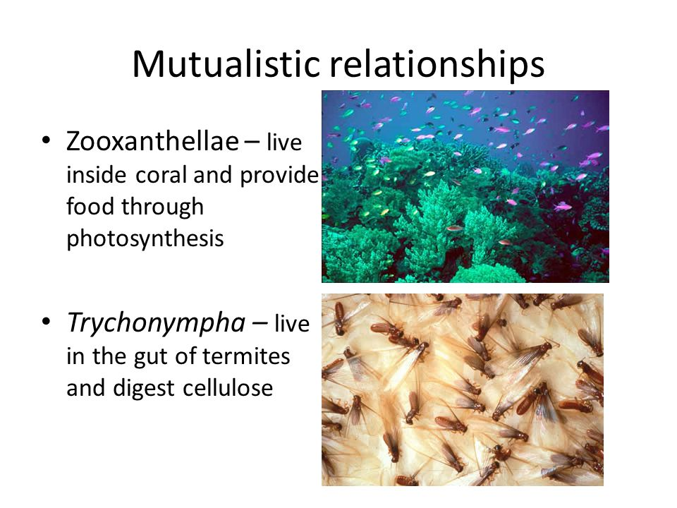 Mutualistic relationships