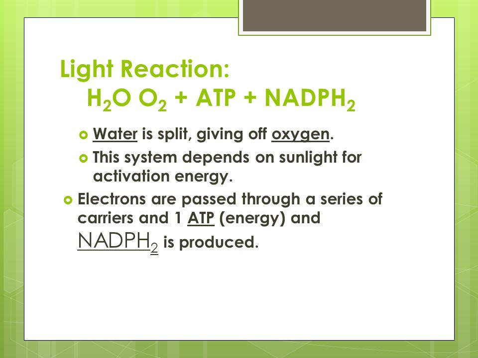 Light Reaction: H2O O2 + ATP + NADPH2