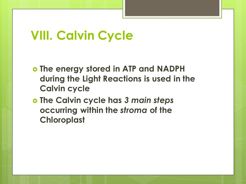 VIII. Calvin Cycle The energy stored in ATP and NADPH during the Light Reactions is used in the Calvin cycle.