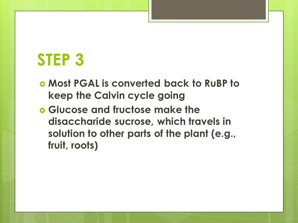 STEP 3 Most PGAL is converted back to RuBP to keep the Calvin cycle going.