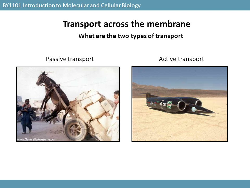Transport across the membrane What are the two types of transport