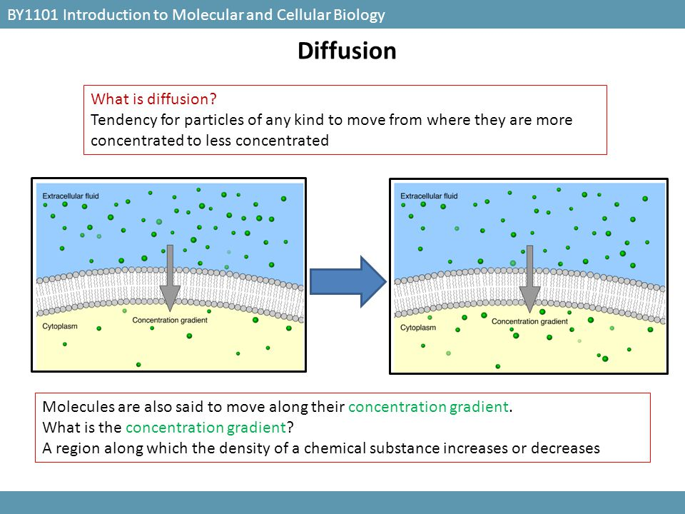 Diffusion BY1101 Introduction to Molecular and Cellular Biology
