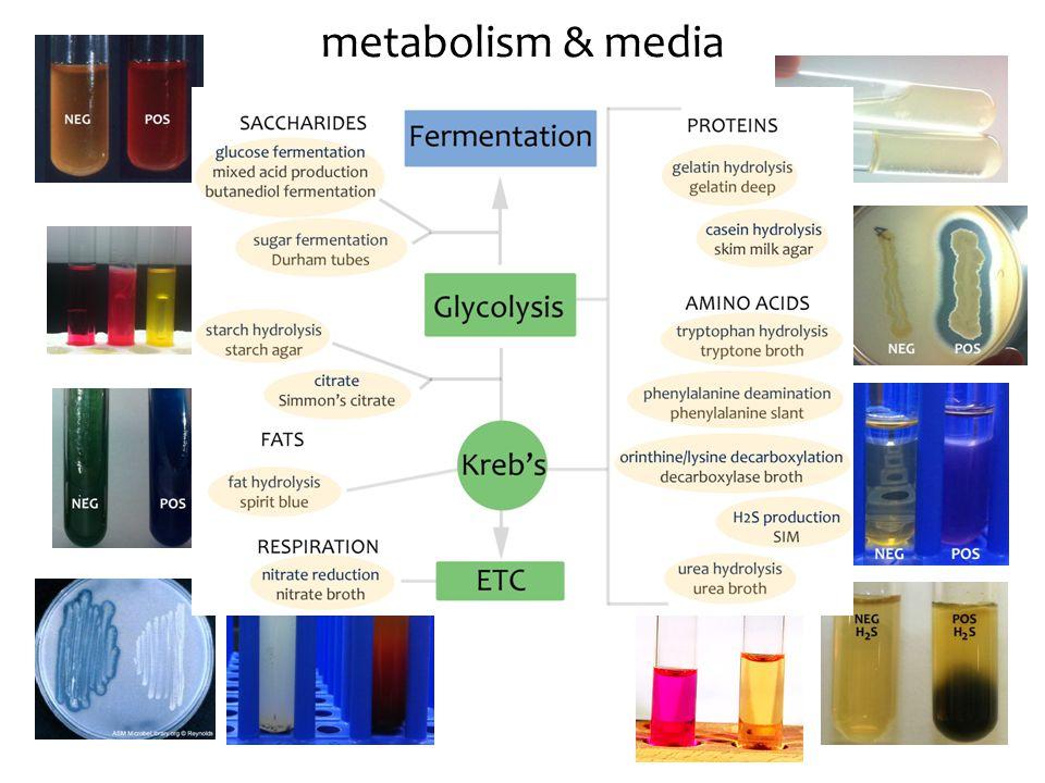 metabolism & media