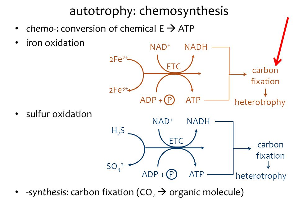 chemosynthesis is the same as chemiosmosis Photosynthesis (photo = light differences between photosynthesis and chemosynthesis membrane provides the energy or push to atp synthase enzyme which then catalyses the synthesis of atpchloroplasts use chemiosmosis to generate atp during photosynthesis the.