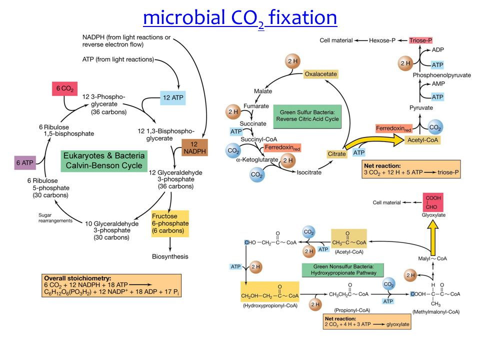 microbial CO2 fixation