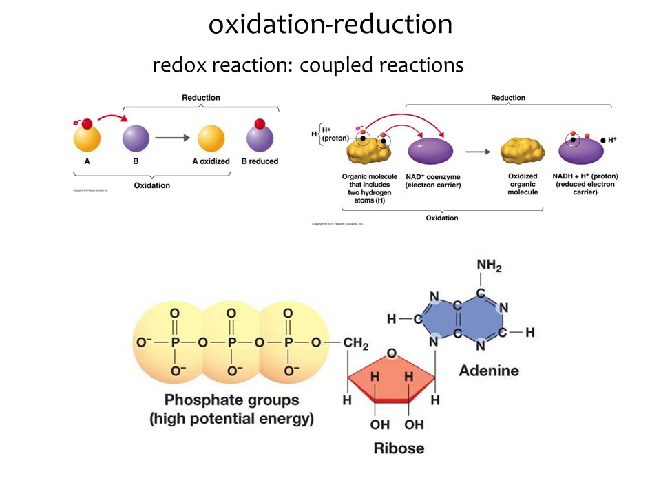 oxidation-reduction redox reaction: coupled reactions
