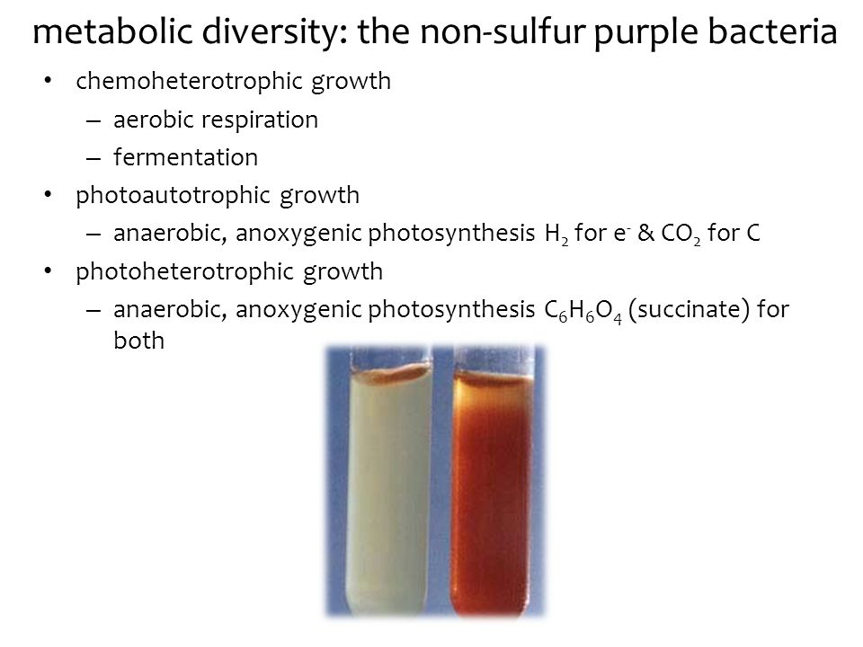 metabolic diversity: the non-sulfur purple bacteria