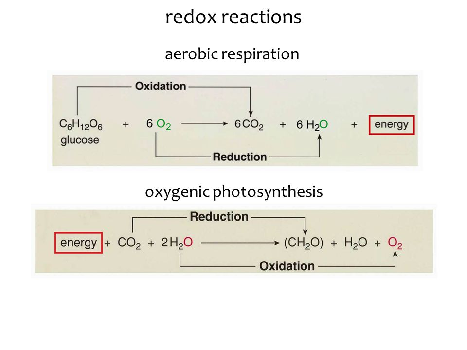 redox reactions aerobic respiration oxygenic photosynthesis