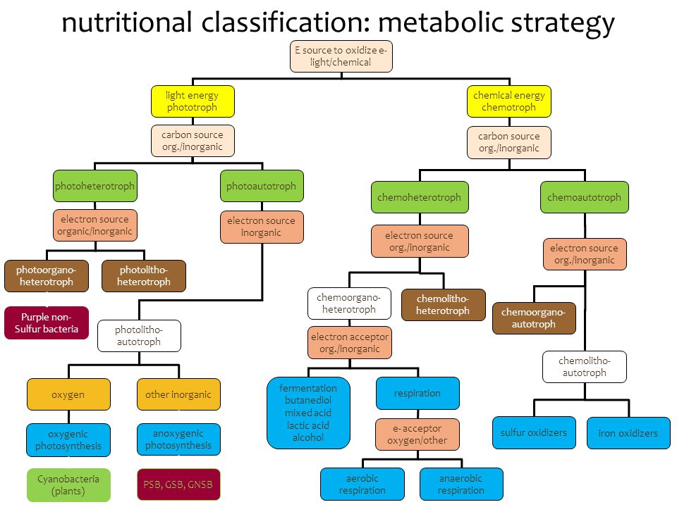 nutritional classification: metabolic strategy