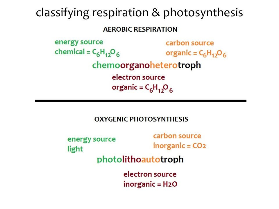 classifying respiration & photosynthesis