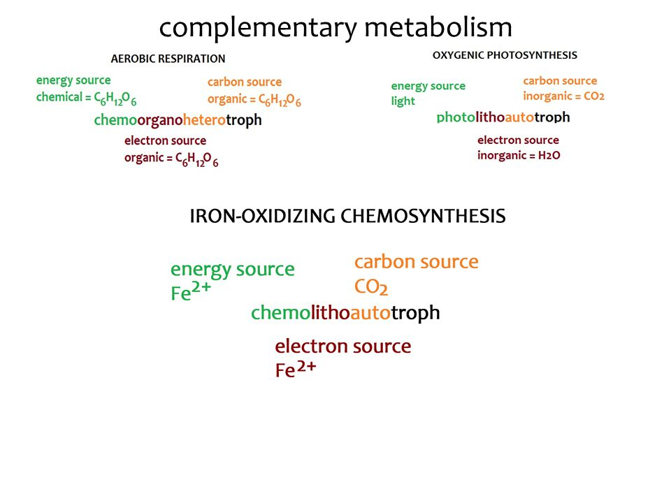 complementary metabolism