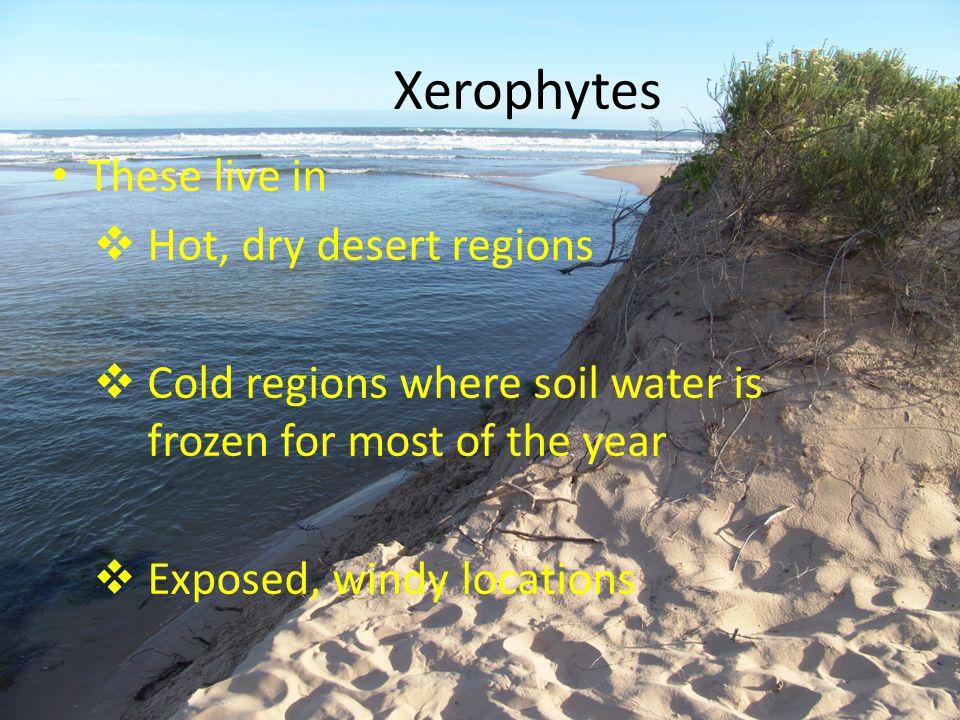 Xerophytes These live in Hot, dry desert regions