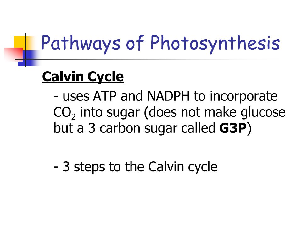 Pathways of Photosynthesis