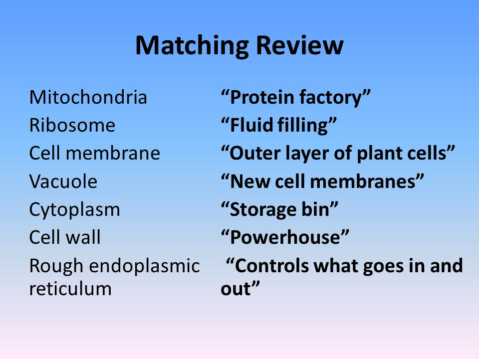 Matching Review