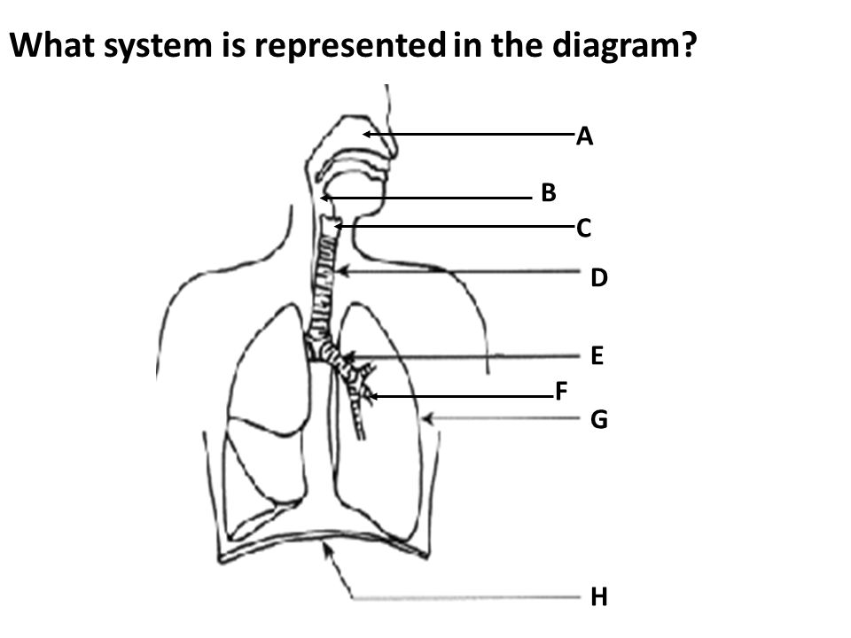 What system is represented in the diagram