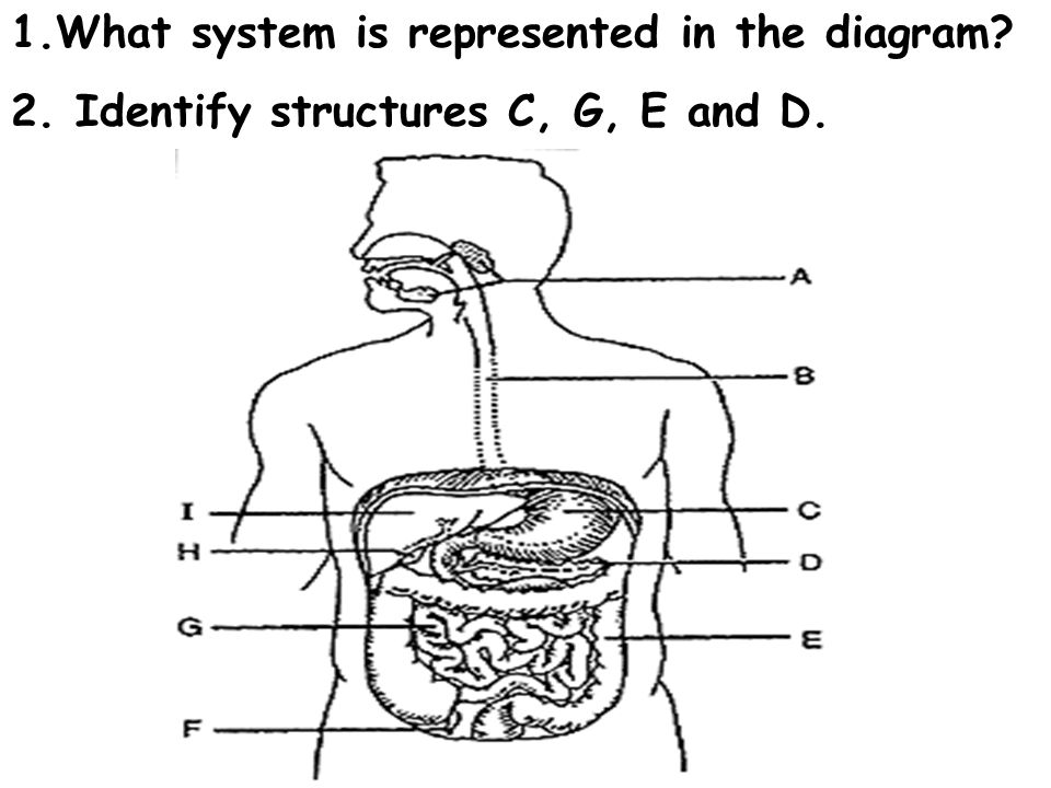 1.What system is represented in the diagram