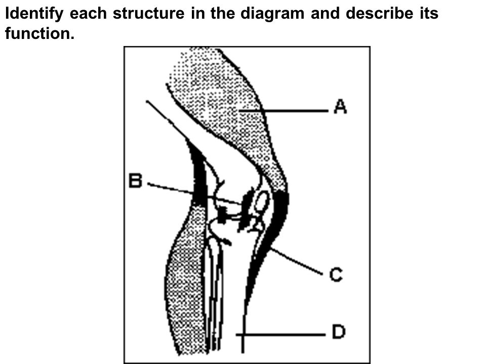 Identify each structure in the diagram and describe its function.