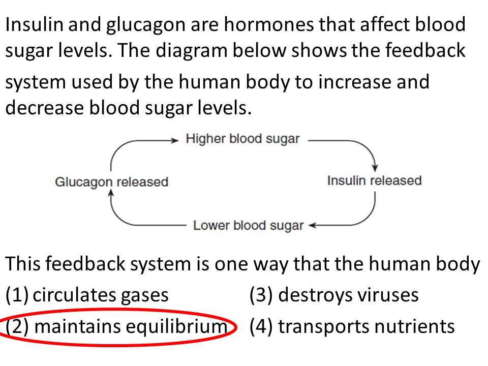 Insulin and glucagon are hormones that affect blood sugar levels